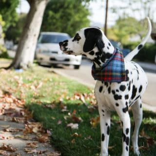 DIY Dog Bandanas For Your Stylish Pooch!