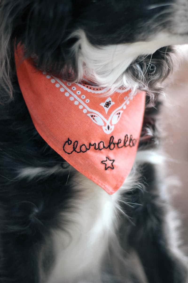 Sewn personalized dog bandana