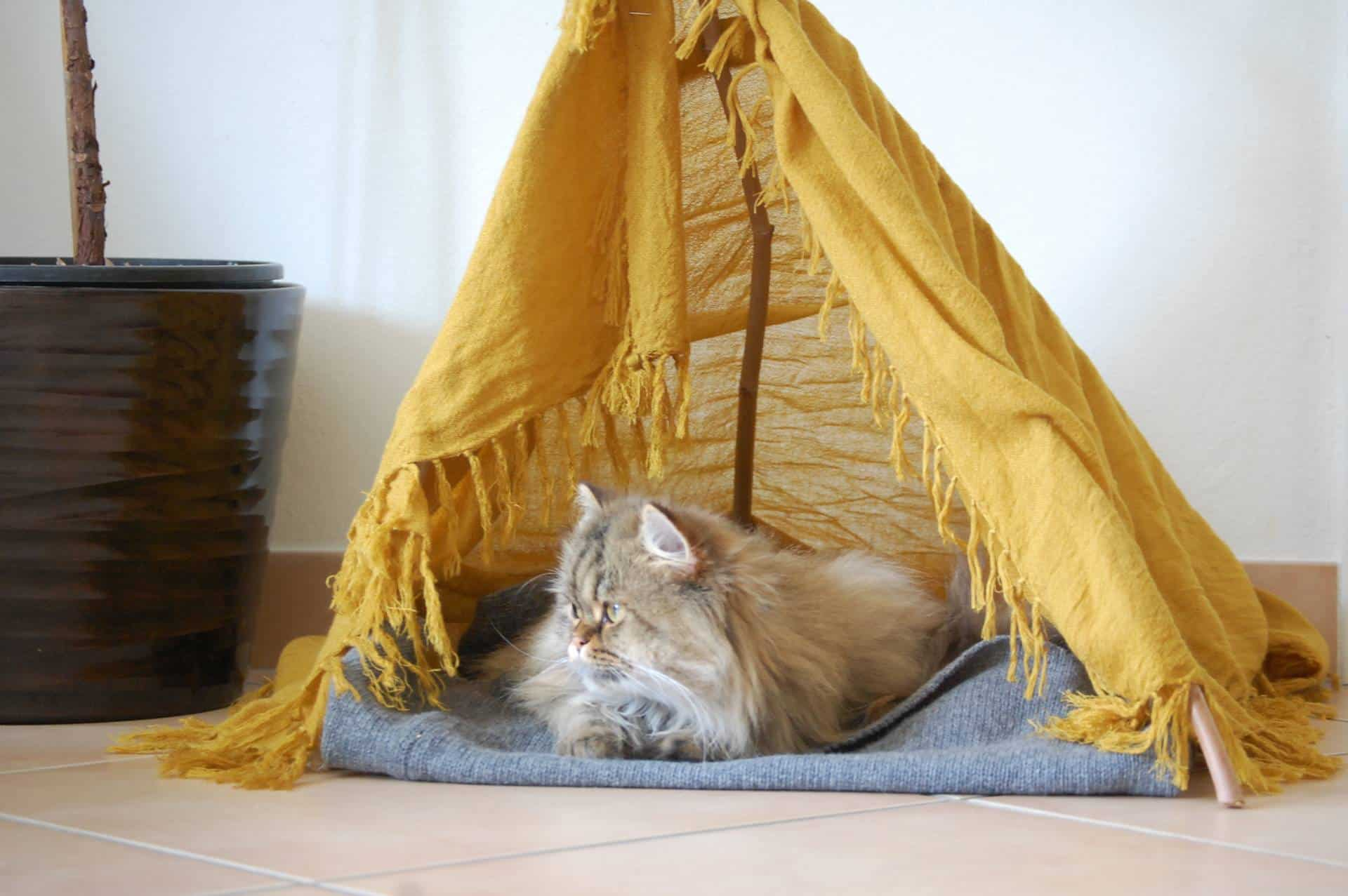 Feline love adorable diy projects for cat owners for Diy cat teepee