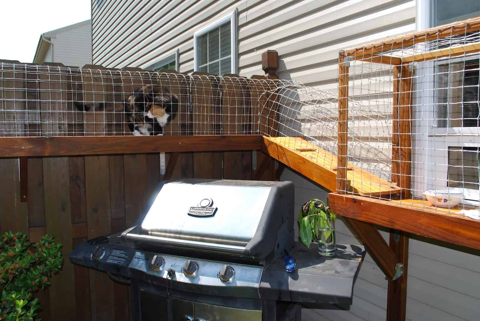 Fence mounted cat run around the yard