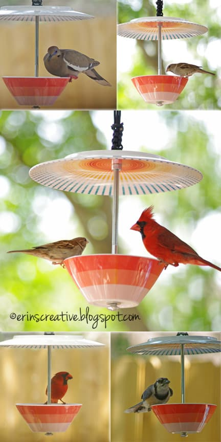 Plate bird feeder