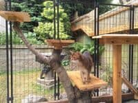 Tree branch cat enclosure 200x150 DIY Cat Runs So Your Furry Friends can Enjoy the Summer Sun