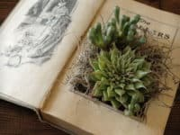 Upcycled book to succulent planter 200x150 Study Time: 15 Creative and Easy Ways to Upcycle Damaged Books