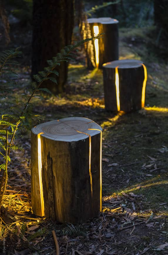 Yard lighting tree stumps