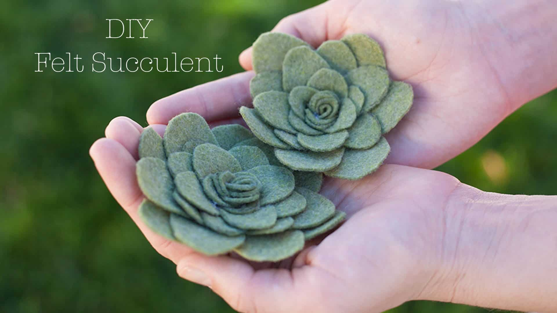 Succulents made with textured felt