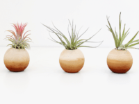 Dip dyed air plant pots 200x150 Shaded with Brilliance: 15 Fantastic Dip Dying Projects