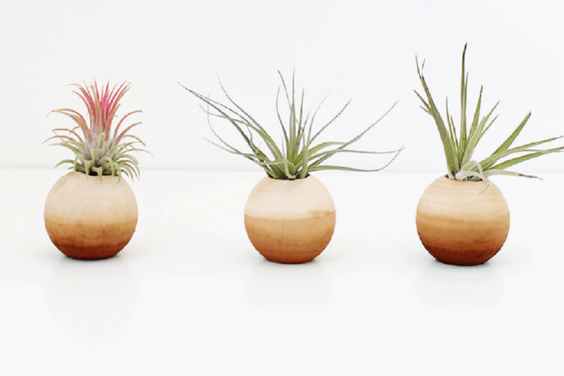 Dip dyed air plant pots
