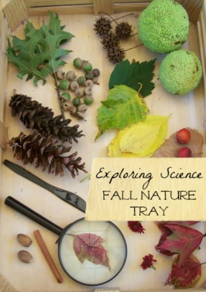 Fall exploration tray 15 Beautiful Fall Leaf Crafts to Try