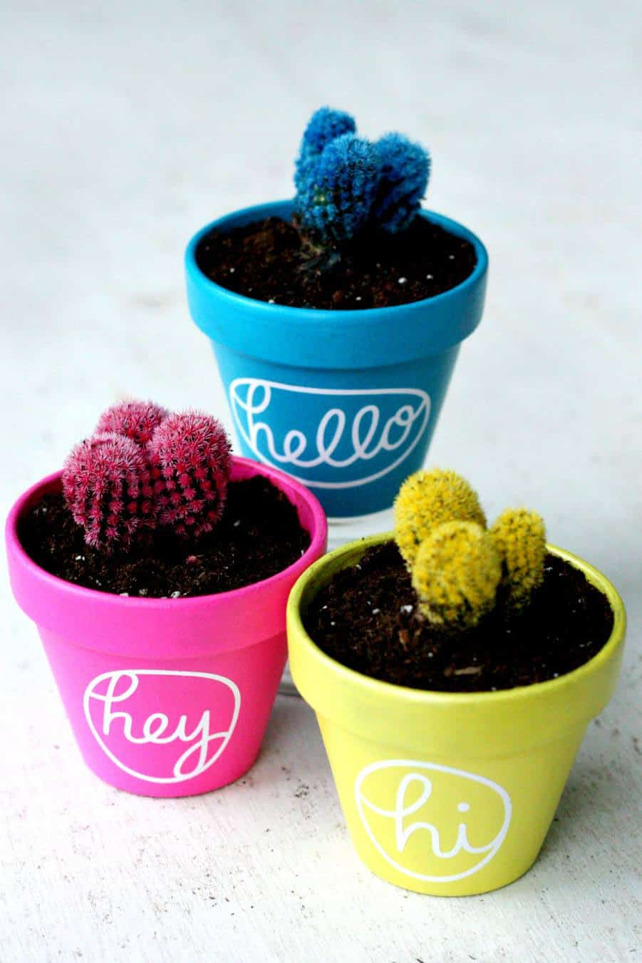 Colourful greeting pots