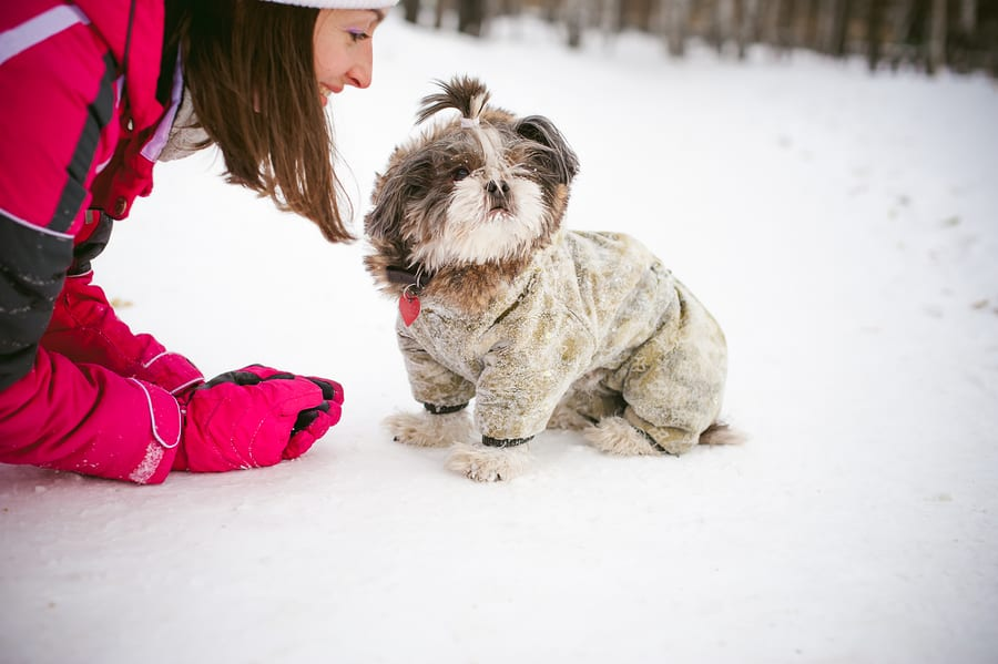 Walk In The Winter Outdoors With A Dog Breed Shih Tzu. A Woman I