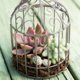 Getting Creative and Green: Unique Indoor Planter Ideas