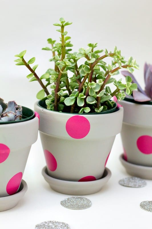 Neon polka dotted pots