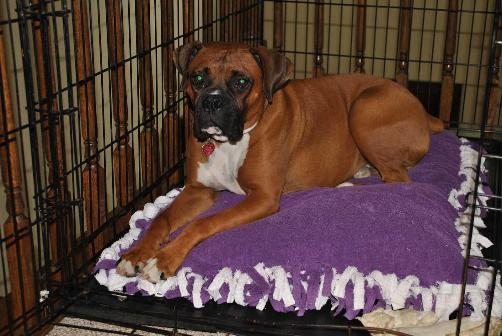 Knot and fringe towel dog bed