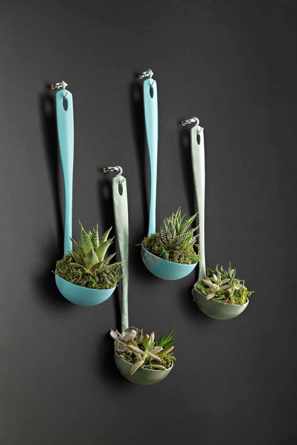 Ladel succulent planter