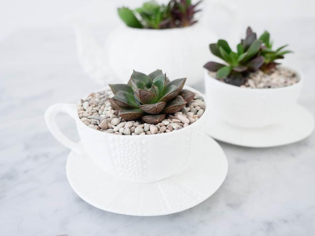 Rock filled tea cup succulent planters