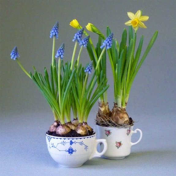 Teacup mini planters