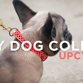 15 Best DIY Pet Collars that Look Fantastic