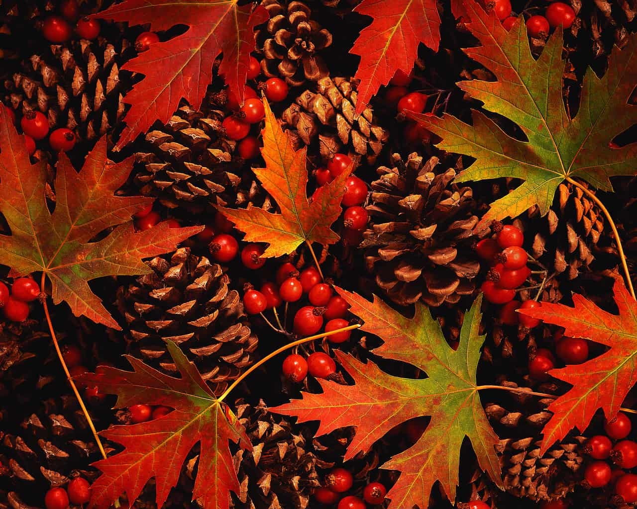 Autumn Leaves, Berries and Pinecones