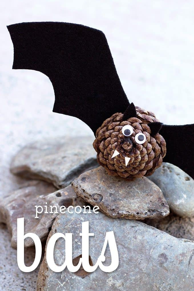 Cute pinecone bats
