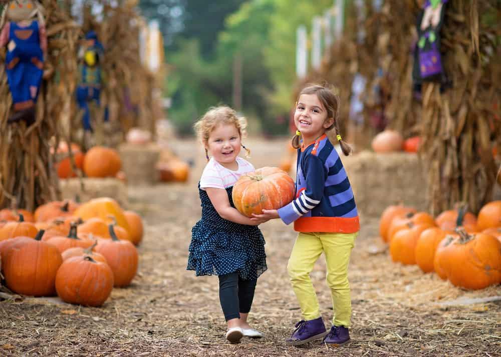 Visit the pumpkin patch