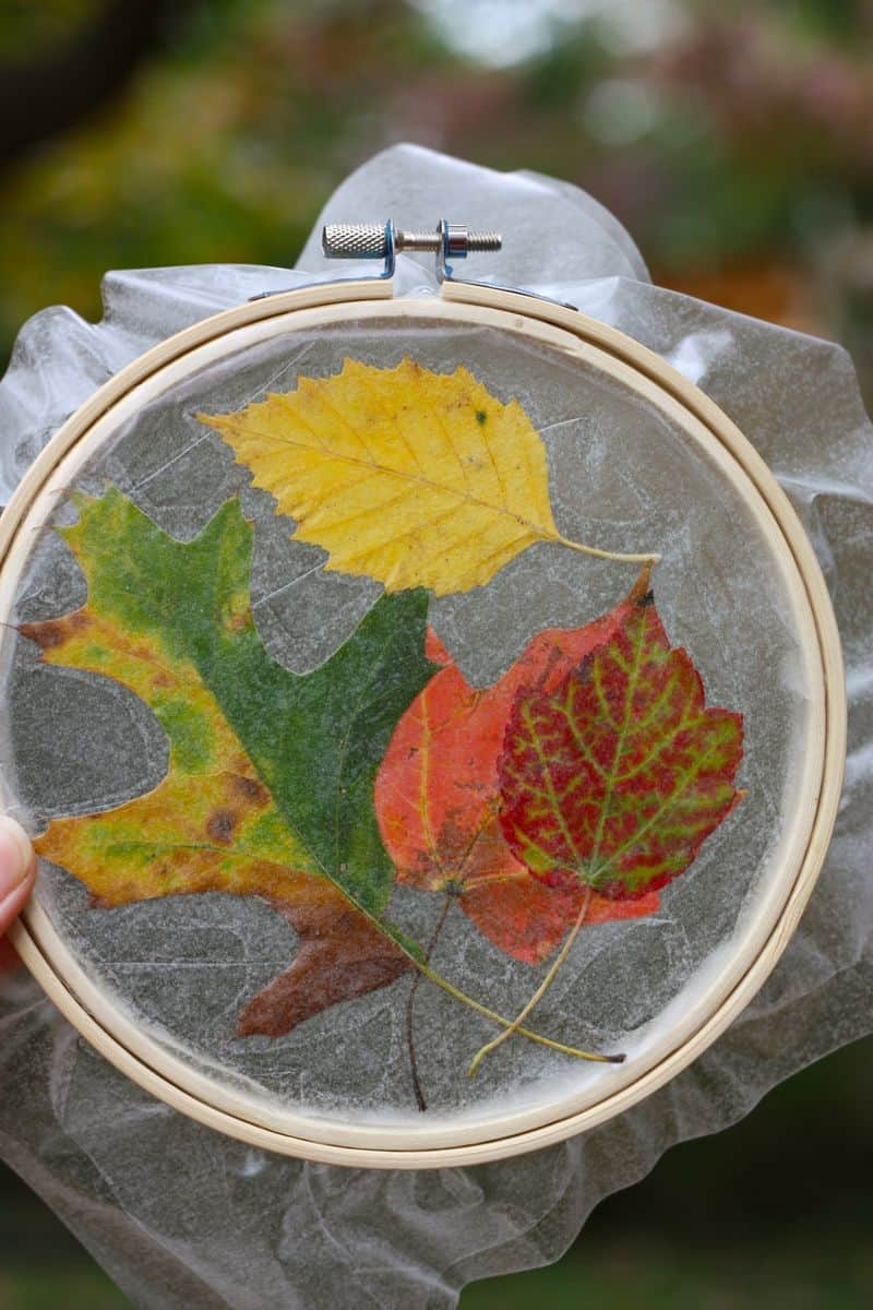 Fall leaf sun catcher