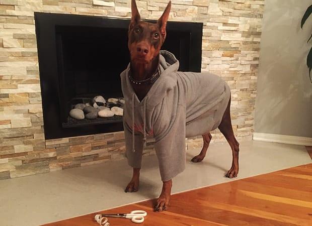 DIY dog hoodie