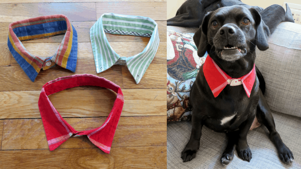 DIY doggie dress shirt collar