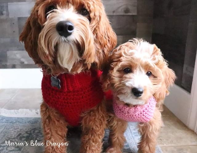 Lovely crocheted dog sweater