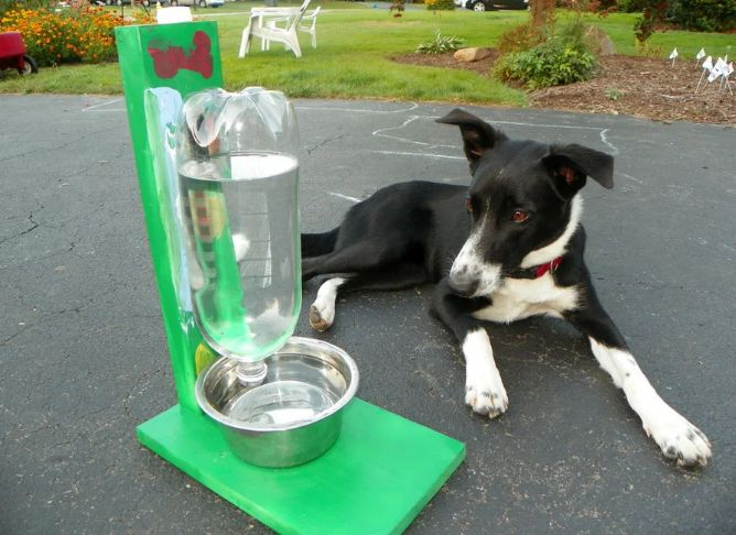 water feeder for dog
